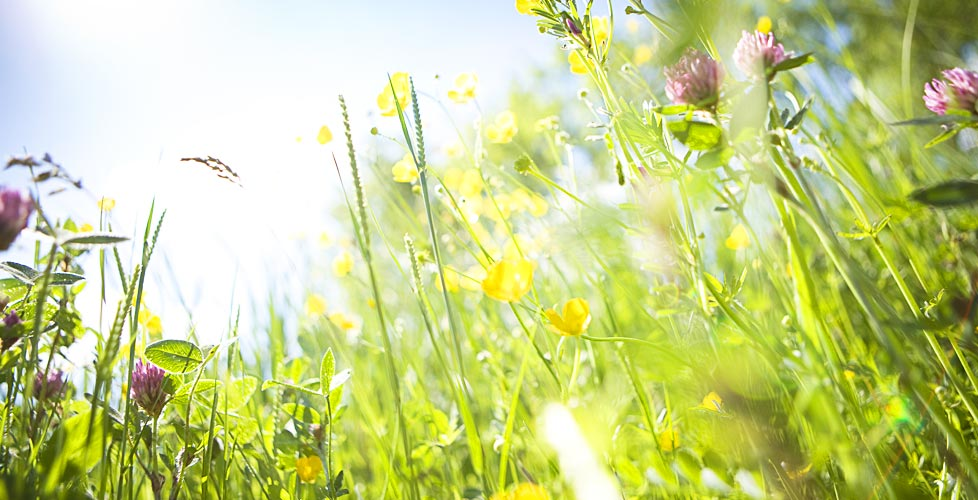 Woodland Landscapes | Ecological Garden Designer | Nottingham and West  978 x 500